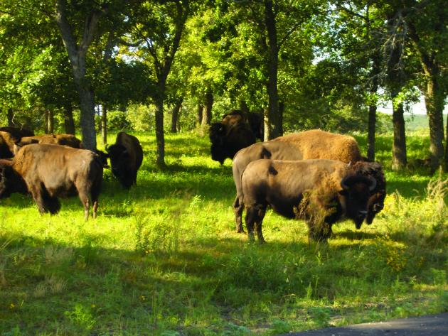 top things to do in North Dakota