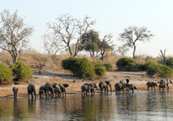 Why Botswana Should Be On More People's Bucket List