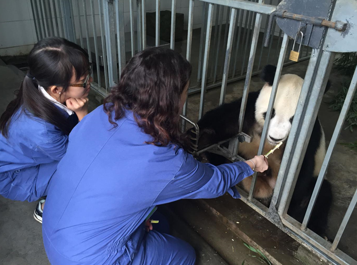dujiangyan panda base volunteer program near Chengdu china