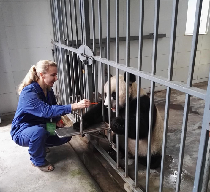 panda volunteering job in china