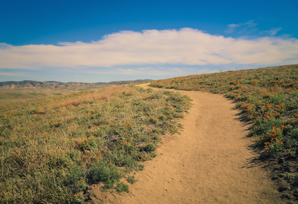 Antelope Valley one of the best day trips from LA