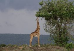 the wildlife is why everyone should visit africa