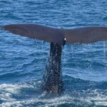 Whale Watching In Sydney – The Best Bucket List Experience