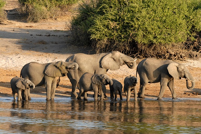 Chobe in Botswana is one of the best places to visit in Africa
