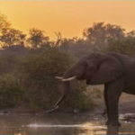 How a Southern African Safari Trip Can Help With Conservation