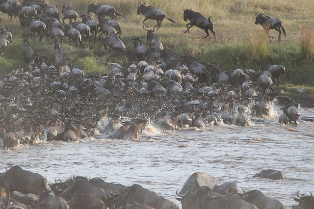 great migration in africa