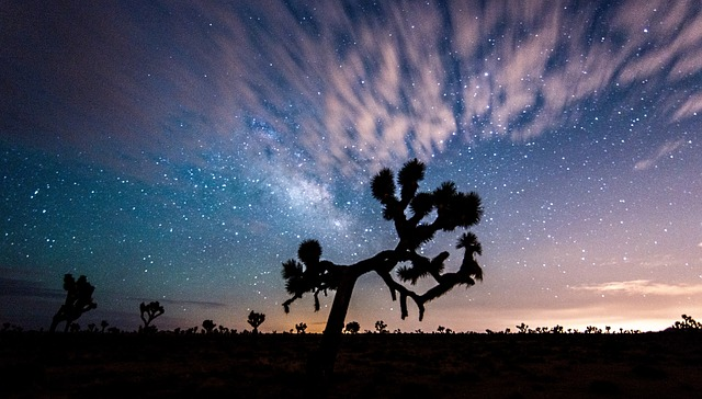 Joshua Tree is one of top California bucket list destinations