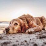 Best Pet Travel Essentials
