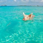 Pondering a Visit to the Bahamas? Here Are 10 Convincing Reasons Not to Delay Your Trip Any Longer