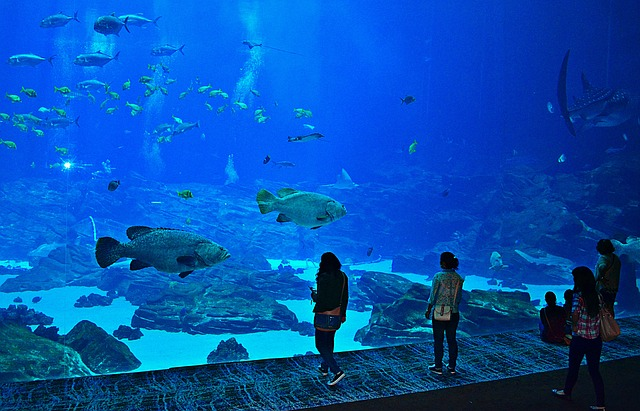 Georgia Aquarium is a must on any 2 days in Atlanta itinerary