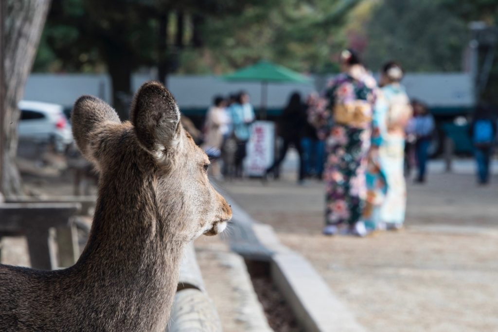 Nara is one of the day trips from Kyoto