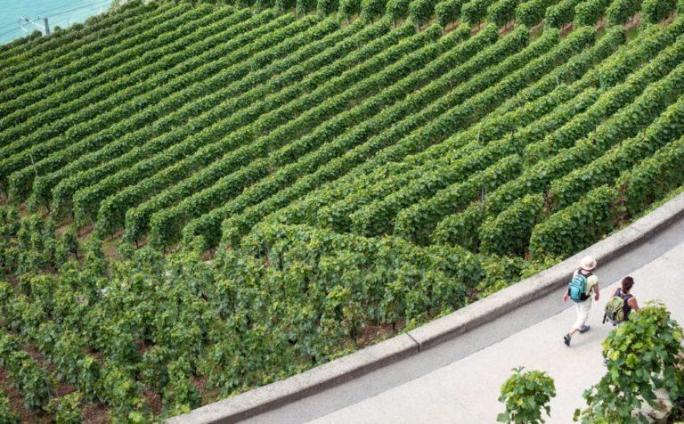 wine destination