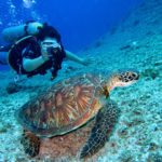 5 Stunning Dive Locations for Your Scuba Diving Bucket List