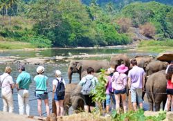 tourists with elephants