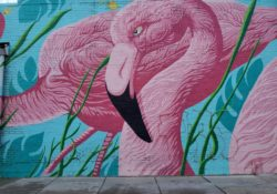 flamingo wall chicago