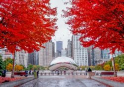 top Chicago fall activities include fall foliage