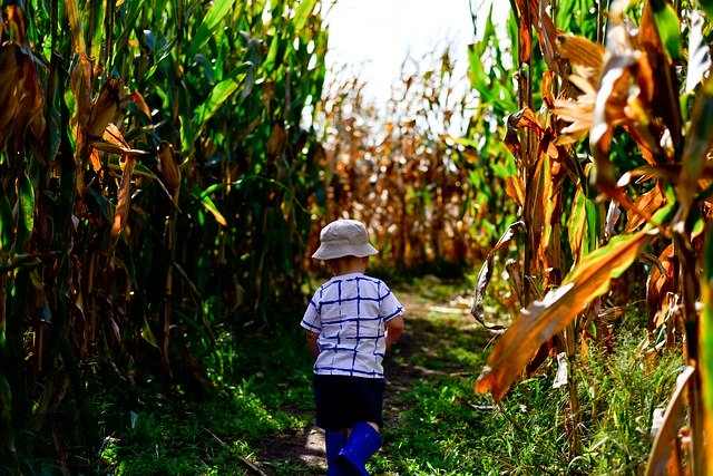 Best Corn Mazes Near Chicago To Visit This Fall