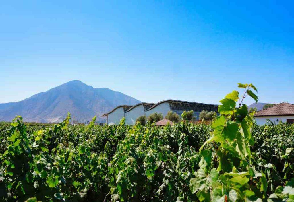 Santiago Wine Tasting